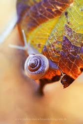 Snaillove