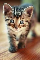 cat4 by paskowanygeju