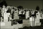 Transylvanian graveyard, 2of4
