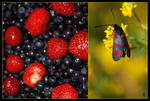 Berries and butterfly