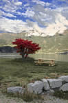 The Red Tree by citrina