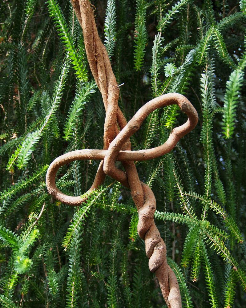 knot by CeaSanddorn
