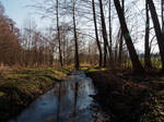 glade forest springtime by CeaSanddorn