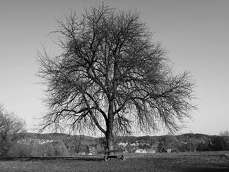old tree by CeaSanddorn