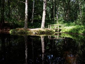 Lietzow forest