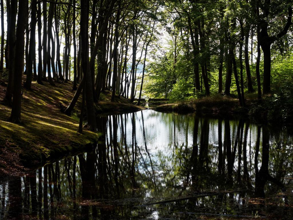 Lietzow pond