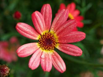 little flower dressed in drops