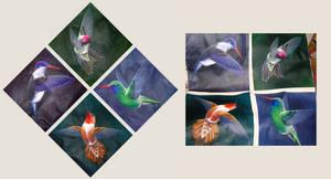 Hummingbird Series 2004