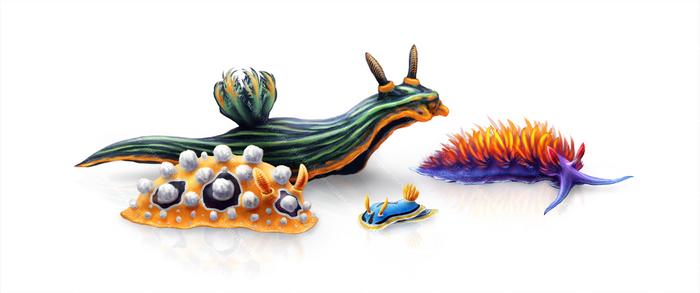 Colorful Toxic Nudibranchs!