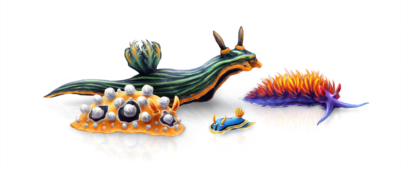 Colorful Toxic Nudibranchs! by MissNysha