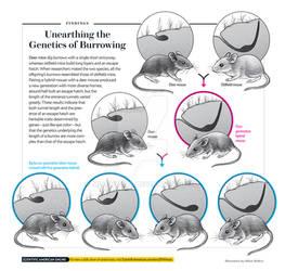 Comm: SciAm Mice Burrows