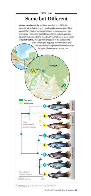 SciAm Commission: fish