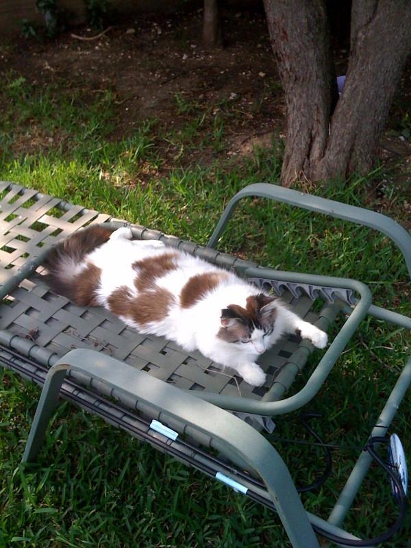 cat sunbathing by WebkinzGeek