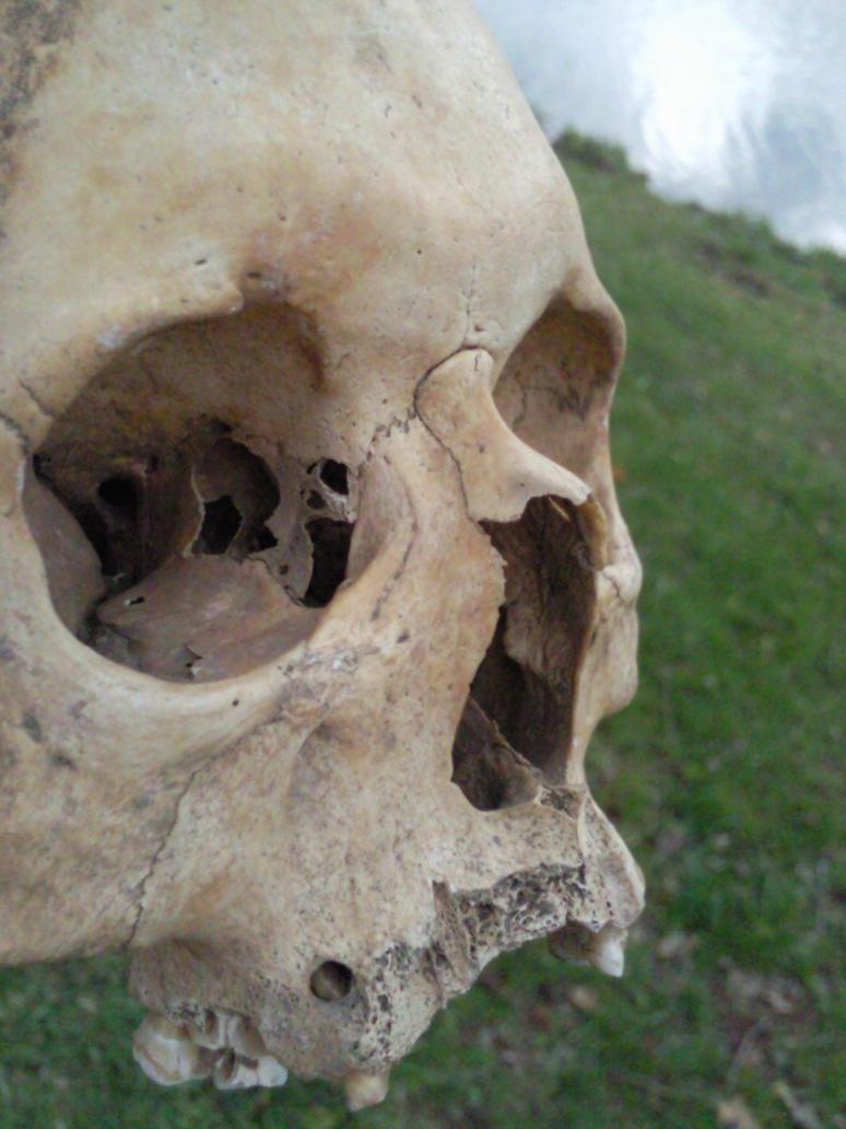 Skull II by Shining-91