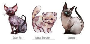 Adoption Auction [CLOSED] Cats