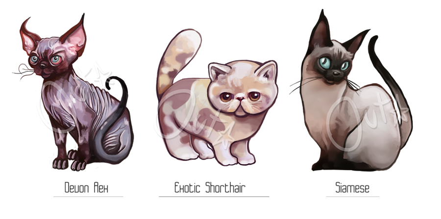 Adoption Auction [CLOSED] Cats by outstarwalker