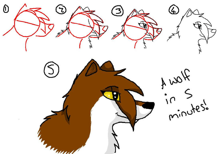 how to draw a wolf spider
