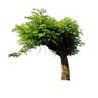 Tree png stock by ady-stock