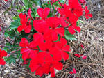 Bee's Flower Bed -- Red