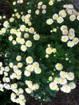 From Bee's Flower Bed - Pastel Yellow