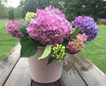 Rainy Day Hydrangeas #12 and 35