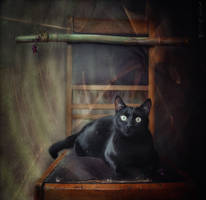 BLACK CAT * by Csyyt