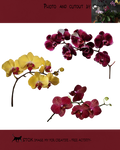 Differrent orchids