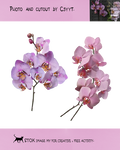 Differrent orchids2