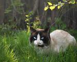 Cat Matthew.