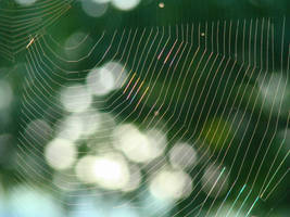 A Spiders Web by GramMoo