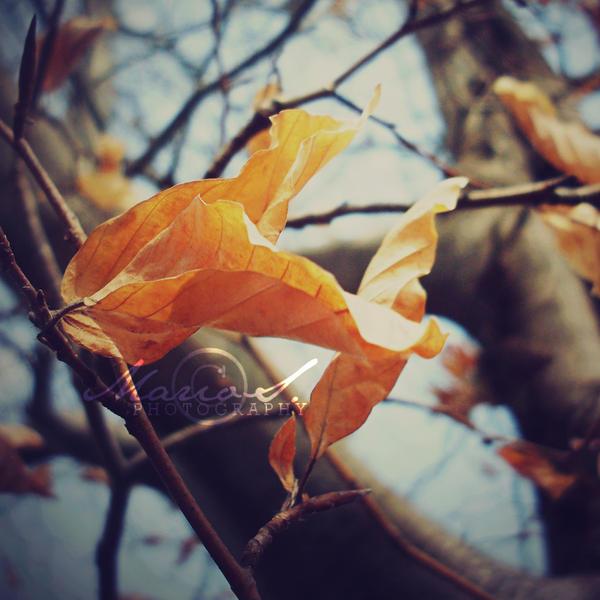 Falling in autumn. by xxkiriku