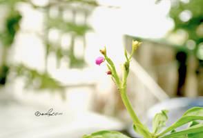 buds.. by xeane21