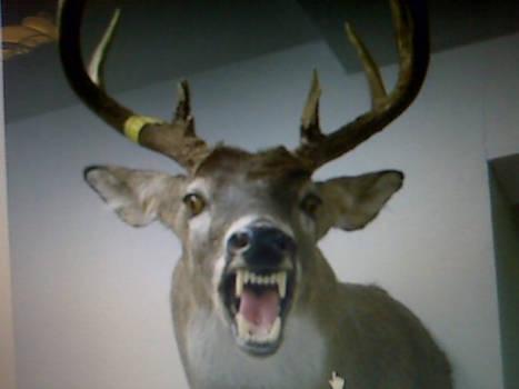Deer head with fangs!