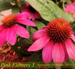 Pink Flowers 3