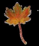 Leaf Stock 1
