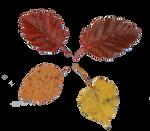Leaf Stock 2