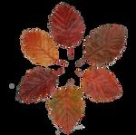 Leaf Stock 3