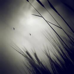 bird flight by TheLastOfDays
