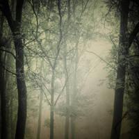 between the trees by TheLastOfDays