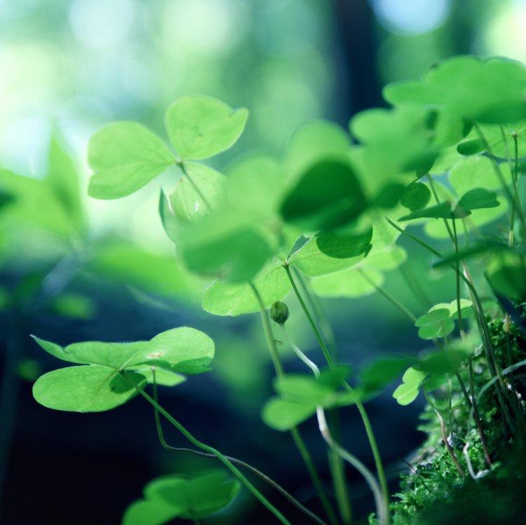 green leaves by TheLastOfDays