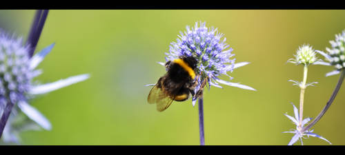 Bee by Gomer08