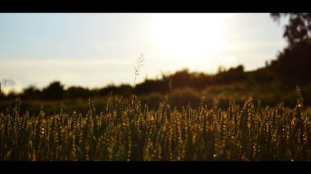 Field by Gomer08