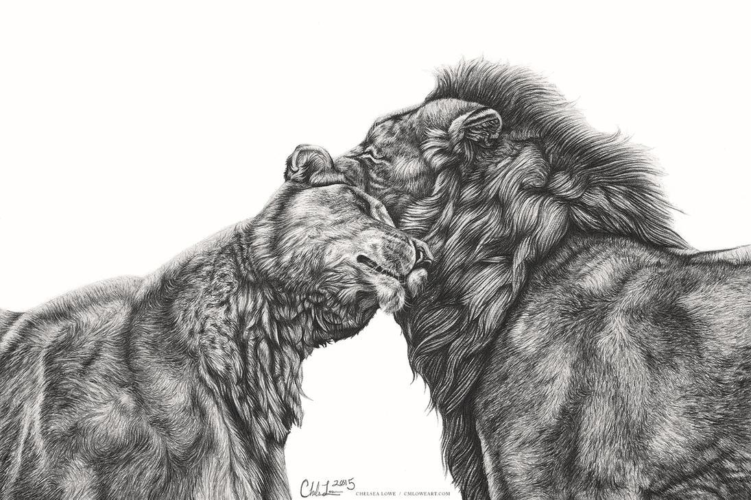 Lion Love by Islandstar