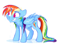 Soaked Rainbow