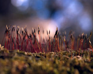 Forest Fungus by rachapunk