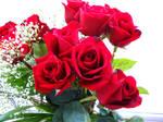 Rose Stock 2