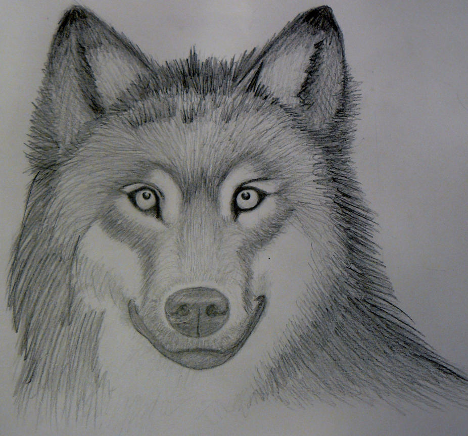 Realistic Wolf Sketch Mark Crilley By Foreverstrawberries How To Draw