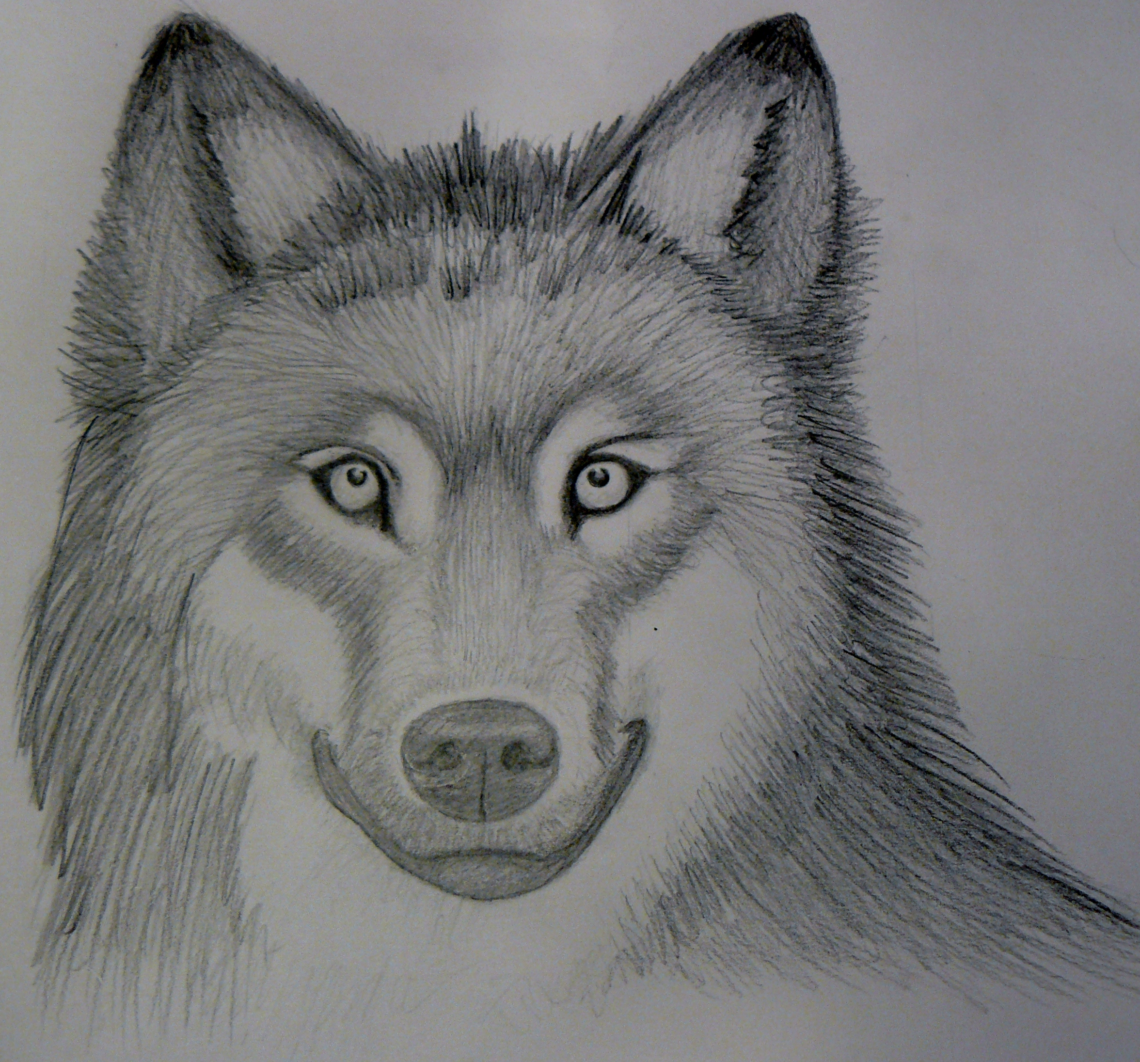 Realistic Drawings Of Wolves Growling Realistic Wolf Sketch-...