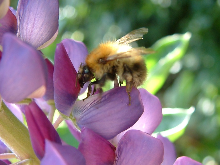Bee2 dating site