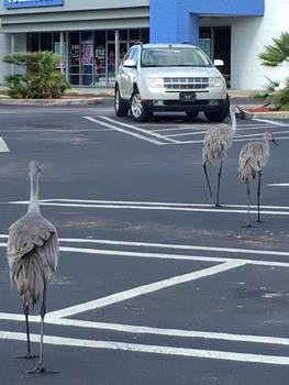 Story: Birding